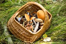 Basket Full Of Mushrooms Kept On Grass In Forest