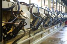 Mechanized Milking Equipment I...