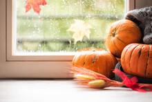 Pumpkins On The Sill Window, R...
