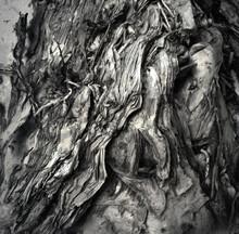 Thin Bark Of A Paperbark Tree
