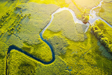 Aerial Drone View Of Winding River In Green Field. Lush Wetlands Of Bird's Eye View.