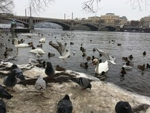 Pigeons On The Bridge