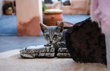 Grey Kitten Hiding Outside. Orange Walls. Cute Cat Feeling Fear And Unsecured