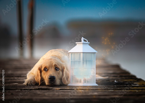 Tableau sur Toile Cane Golden Retriever sul molo vicino ad una lanterna magica