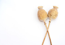 Dry Poppy Seed Heads Isolated ...