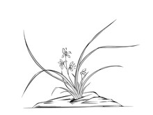 Digital Illustration Of Orchids, Black And White.