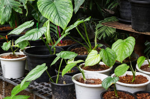 Obraz Green plants feel fresh surroundings, stock photo - fototapety do salonu