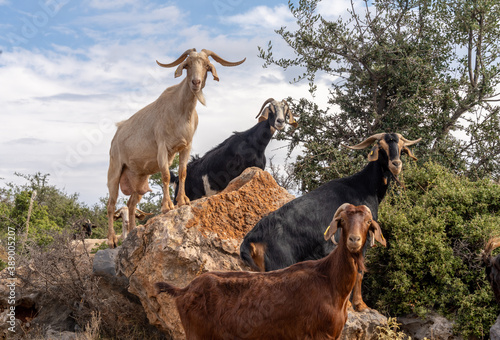 Fascinating encounters with goat herds on the back roads of the Peloponnese Peni Canvas