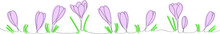 Purple Crocuses - Vector One Line Drawing For Web Design. Beautiful Flower Arrangement For Cover Decoration, Spring Primroses Flowers.