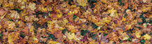 Panorama Of Varicoloured Wet Fallen Leaves. Colorful Vivid Yellow Leaves.
