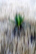 Agave (Pita) Americana, Aloe PlantAgave (Pita) Americana Plants And Their Spire-like Flowers (Inflorescence)grow In The Cabo De Gata National Park, Almeria, Spain. Unesco Biosphere Reserve