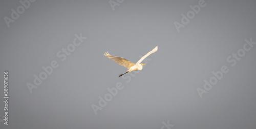 Fototapeta Dzikie ptaki w swoim naturalnym środowisku. obraz