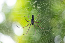 Red-Legged Golden Orb Spider Close Up, Sunlight Hitting On Its Body, Forest Background.