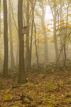 Autumn Foggy Forest With Bird Booth