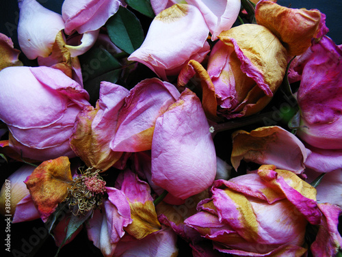 Withered   pink rose petals, still life Fotobehang