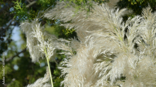 Valokuvatapetti pianta