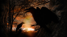 Black Crows Croaking In Forest At Sunset. Fantasy World
