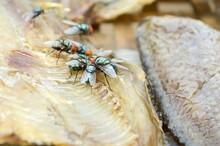 Fly On Dry Nile Tilapia Salt Fish