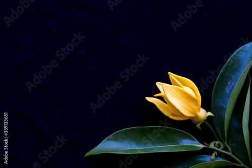 Canvastavla yellow flowers ylang ylang local flora of asia arrangement  flat lay postcard st