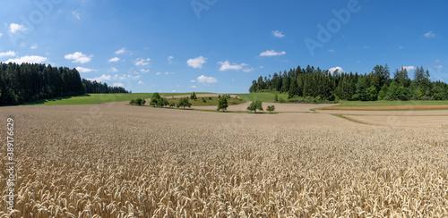 Reifes braunes Weizenfeld in idyllischer Landschaft mit Bäumen und Wäldern Canvas-taulu