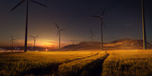 Beautiful Sunset Field With Wi...