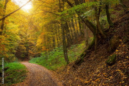 Fotografie, Tablou Road in the beautiful colorful autumn forest in Hungary
