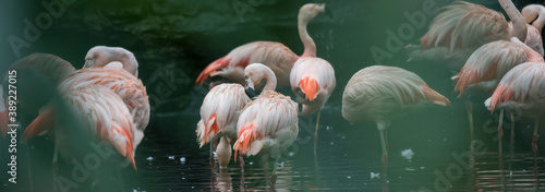 Stampa su Tela Beautiful flamingo in nature