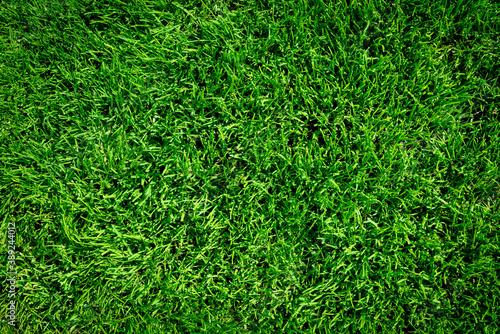 Fotografia Background of green grass field or green grass pattern and texture (high details