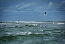 Seagull Flying Over Rough Sea