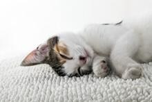 Little Kitty. Pussy Cat.. Youn...