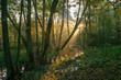 światło w jesiennym lesie