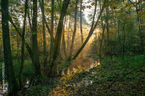 światło w jesiennym lesie - fototapety na wymiar
