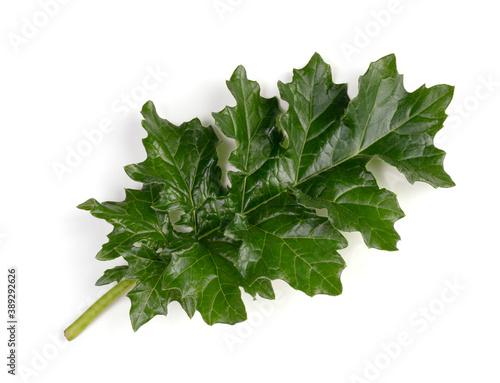 Young Acanthus mollis leaf Canvas-taulu