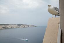 Seagull Overlooking The Sea,  ...