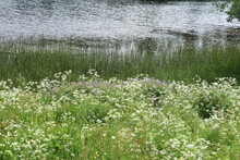 Wild Flower Field In Front Of A Pond In A Natural Landscape