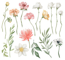 Watercolor Set With Bright Summer Flowers And Leaves. Chrysanthemum, Carnation, Rose, Poppy, Branches. Meadow Wildflower, Leaves, Spring Field. Watercolor Botanical Illustration Isolated On White