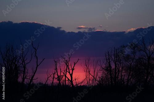 Obraz Krajobraz widowiskowy zachód słońca nad wymarłym lasem - fototapety do salonu