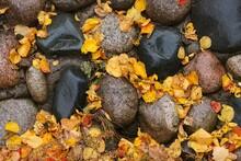 Autumn Foliage After Rain On T...
