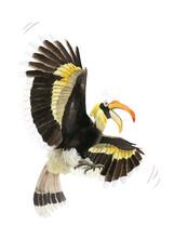 A Bird Hornbill Hand Drawn In ...