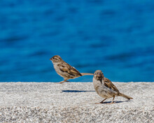 Sparrows Perched On A Wall By ...