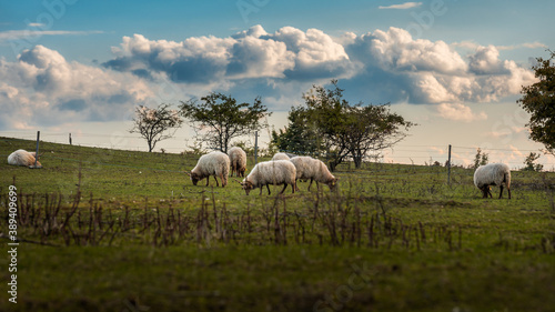 Wide angle shot of a sheepherd grazing on a hillside under the cloudy sky in the Canvas Print