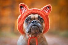 Adorable French Bulldog Dog We...