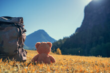 Teddy Bear And Backpack In The...