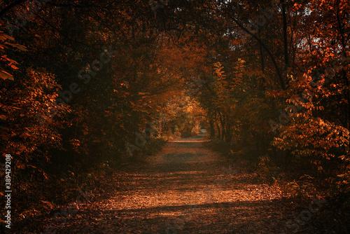 Fototapety, obrazy: Autumn scene