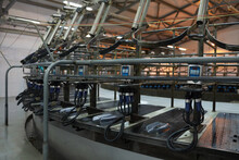 Close Up Background Image Of Industrial Cow Milking Machine At Modern Dairy Farm, Copy Space