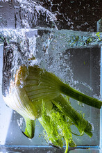 Fennel Falling Into Water