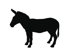 Zonkey Vector Silhouette Illustration Isolated On White Background. Zebra Silhouette. Donkey Silhouette Symbol. Zorse Or Zebrula Or Zonkie.