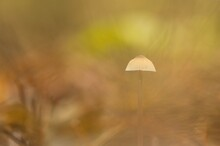 Little Mushroom In Autumn In The Forest With Dreamy Bokeh