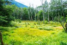 ウェストン園地の湿原