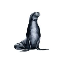 Watercolor Drawing Sea Seal